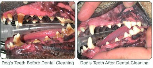 Dental-Care-Image3